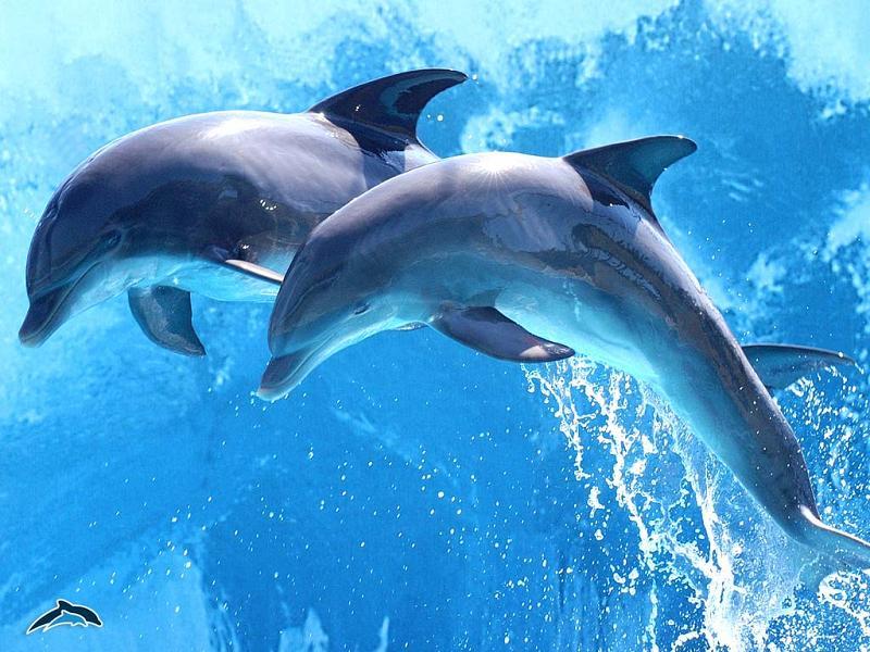 delfinii au sau nu vedere