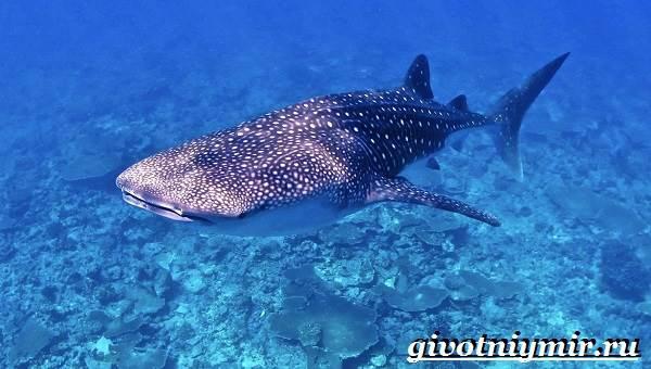 Despre Surprinzătorii rechini - National Geographic Channel - România