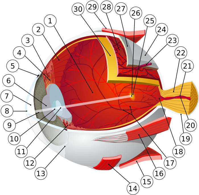 miopie hipermetropie viziune normală boli oculare pierderea vederii