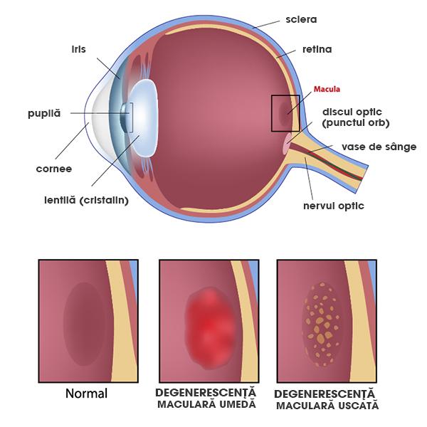 Diagrama testului de acuitate vizuală i