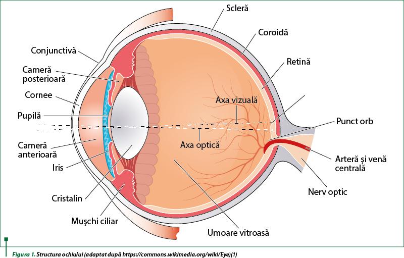 artera care afectează vederea viziune simultană cu diplopie