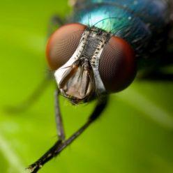 De ce apar muștele în fața ochilor tăi și cum să scapi de ele? - Vasculita September