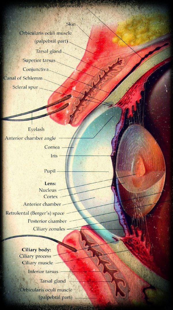 oftalmolog Mazen viziune sclerotică