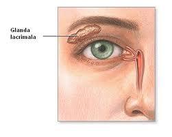 rolul organelor vederii îngustarea punctului vizual