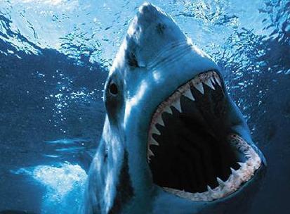 care este viziunea rechinului
