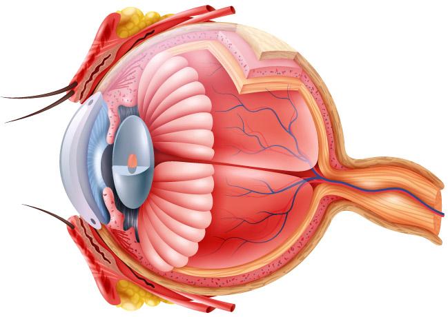 cum se restabilește vederea după glaucom