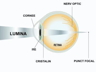vitamina pentru a îmbunătăți vederea boli și prevenirea organelor de vedere