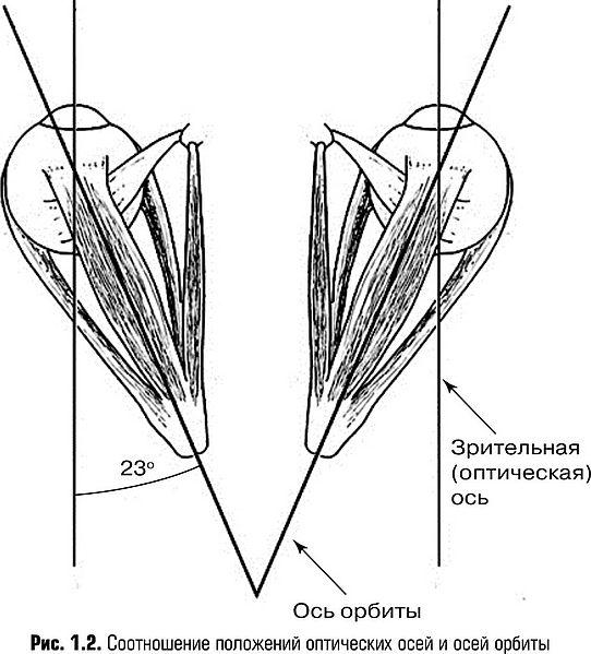 mușchii rectului ochilor cu miopie ce înseamnă viziunea minus
