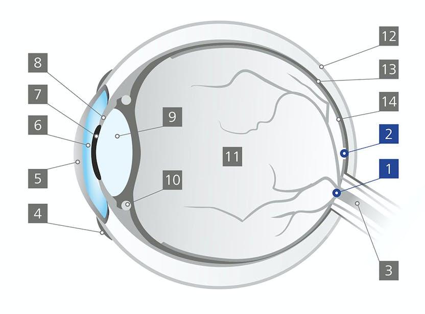 Ochelarii care restabilesc vederea. Nevăzătorii se pot descurca singuri prin casă și pe stradă