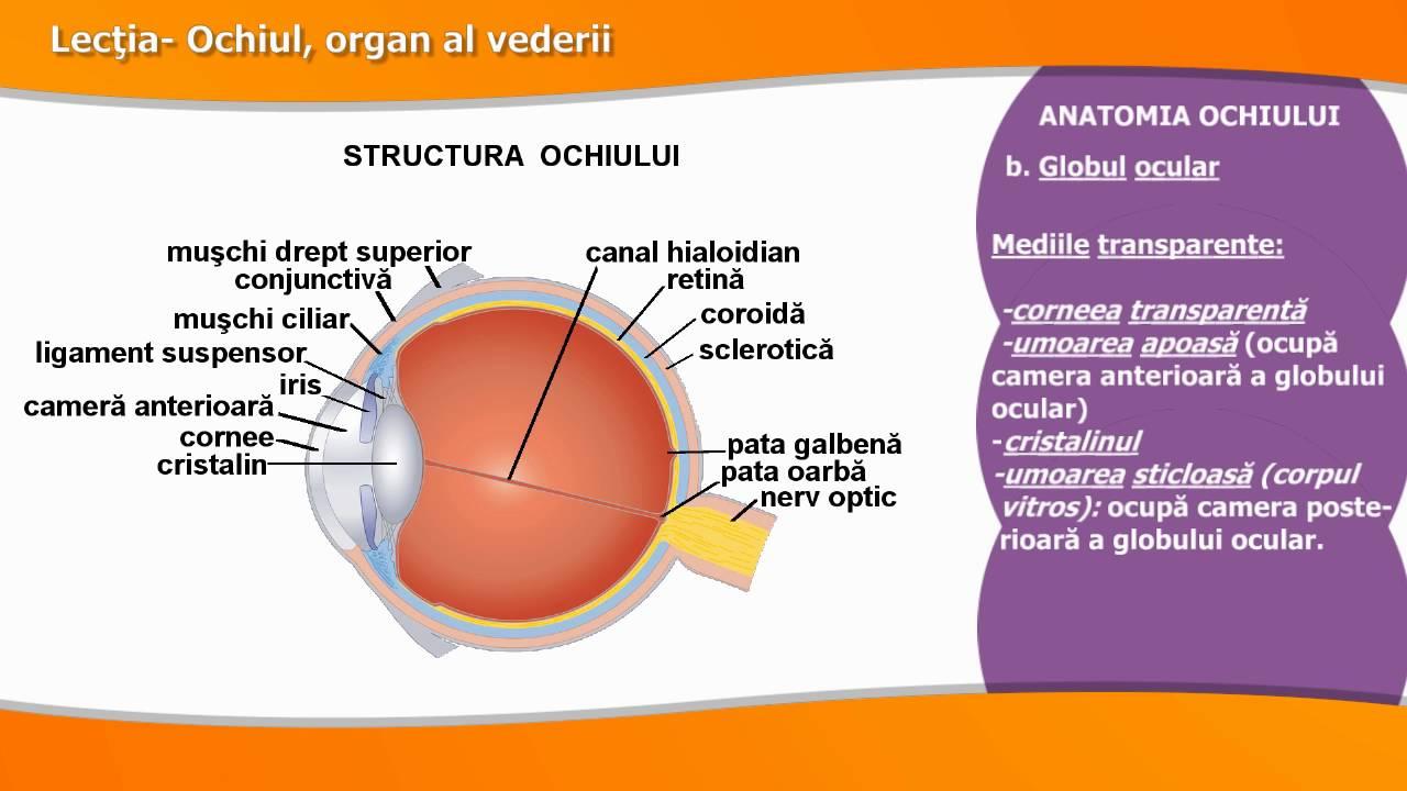 rolul organelor vederii de ce cărțile îți strică vederea