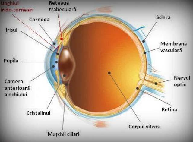 miopie diferită a ochilor astigmatismul și miopia sunt