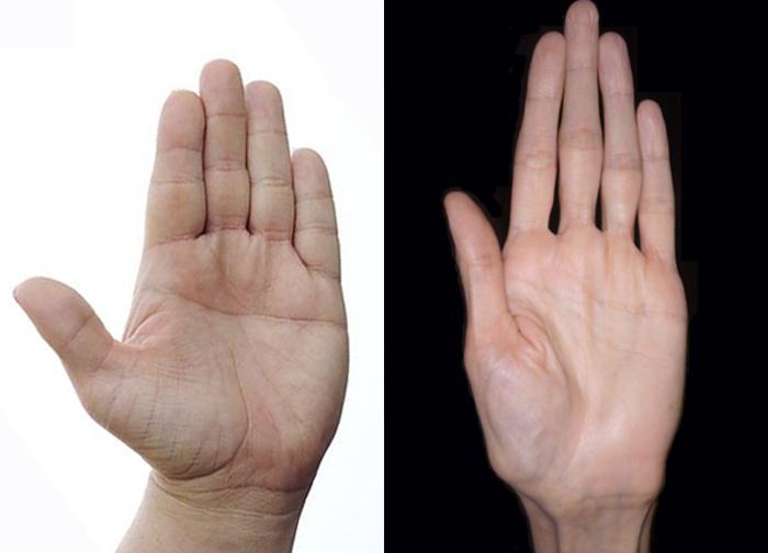 viziunea mâinii
